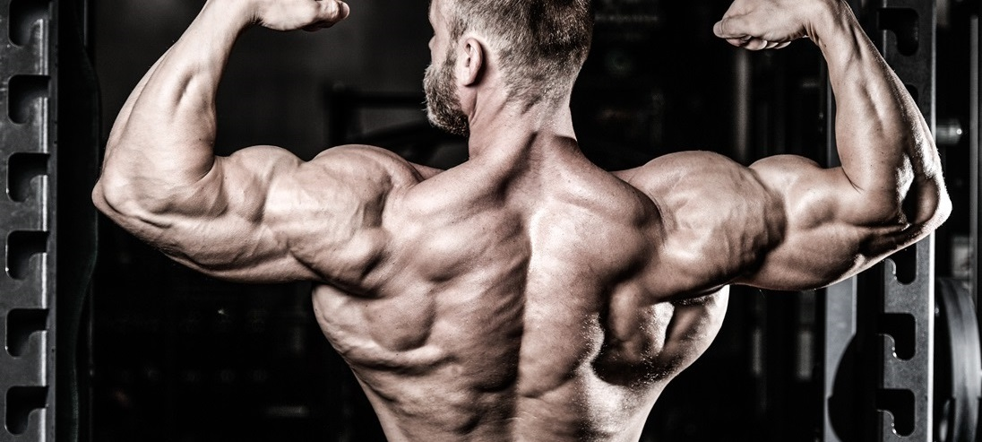 پرورش عضلات پشت